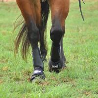 Cashel Splint Boots